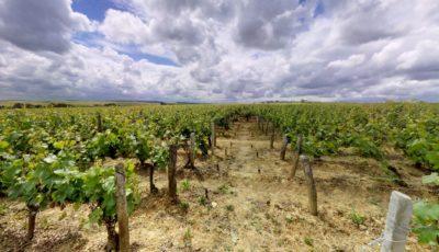 Vignoble L&C Poitout / Parcelle de l'Inextinct